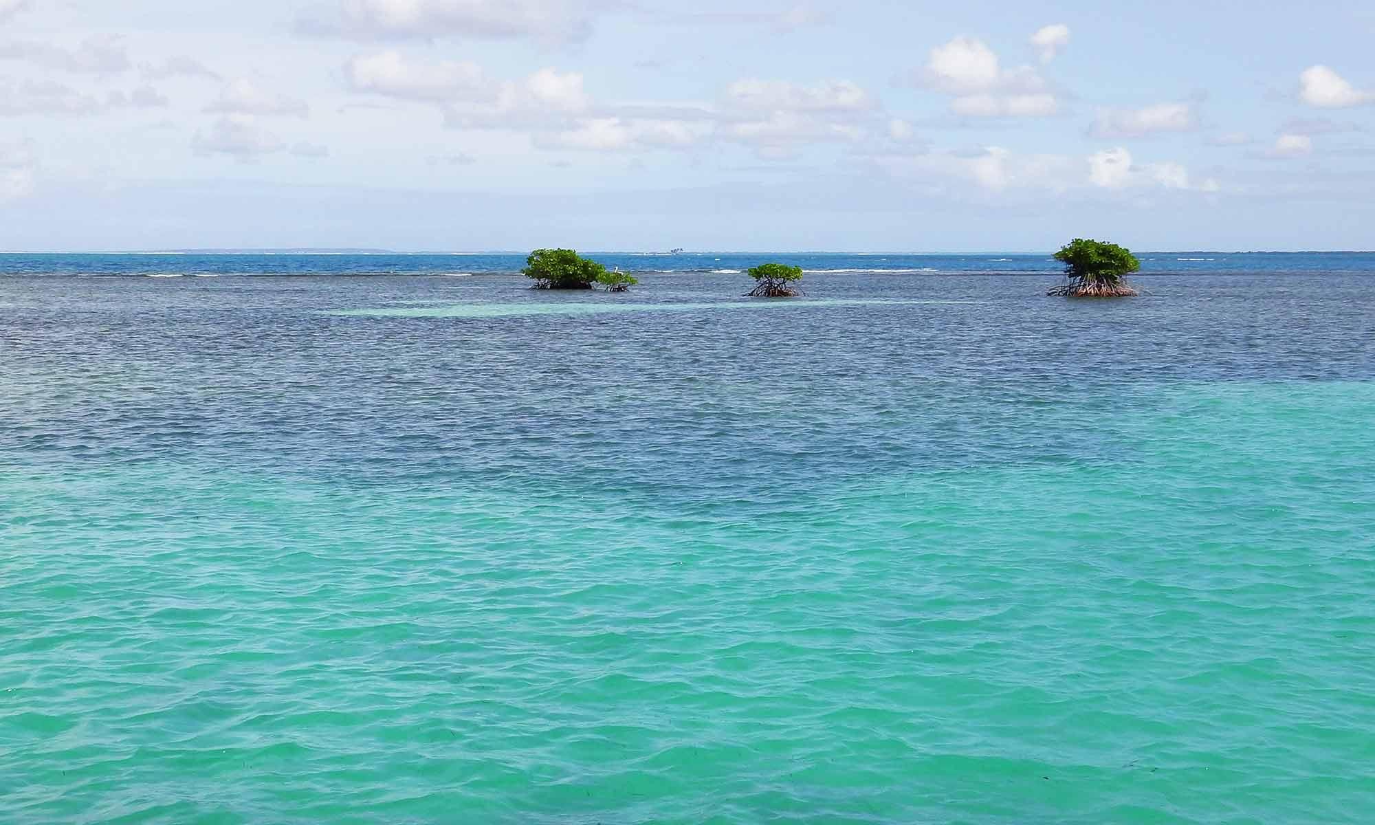 îlots de palétuviers